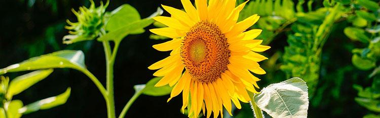 Venda de flores deve crescer mais de 6% no fim do ano