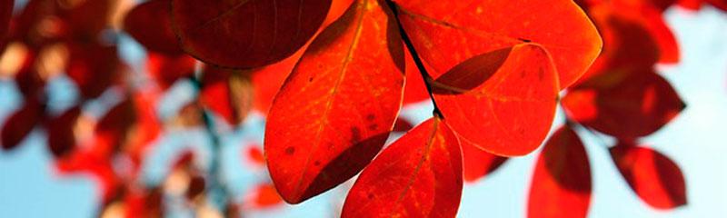 Aproveite o outono para se deliciar com produtos da época!