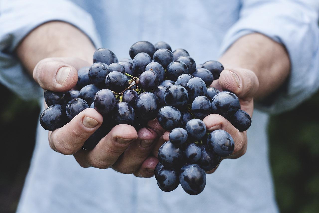 Semana dos Alimentos Orgânicos começa dia 24 deste mês