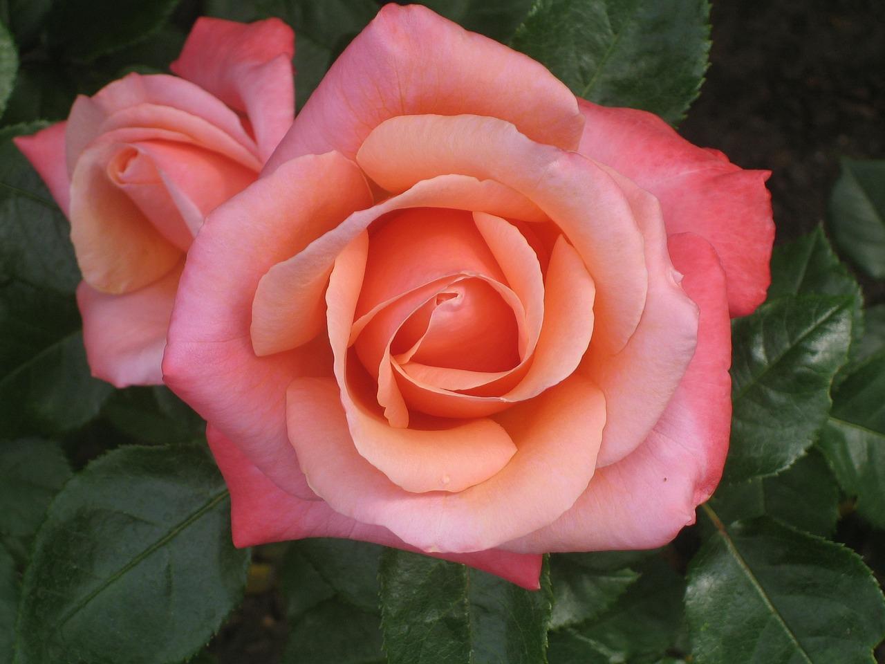 Mercado de Flores da Ceasa Campinas é influência no país