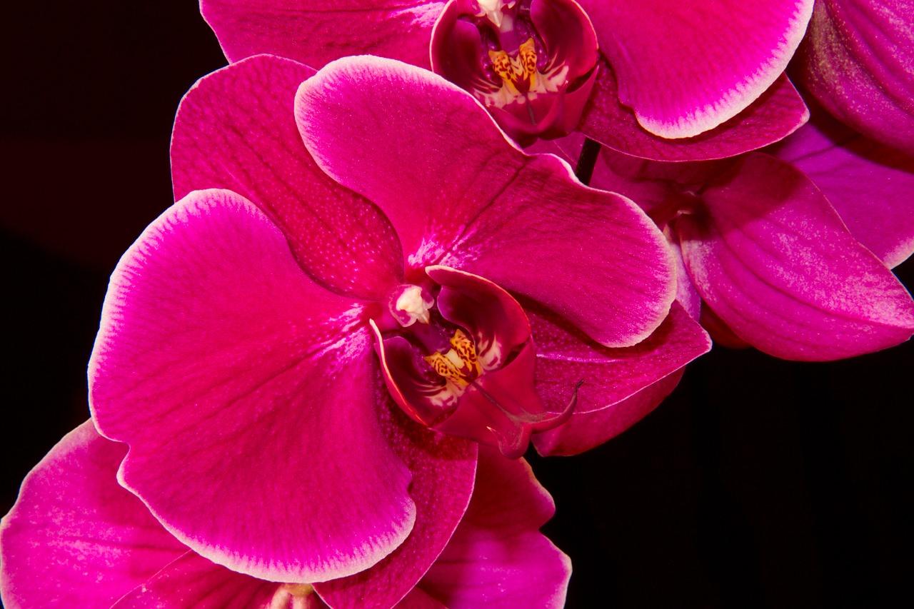 Orquídeas, paixão à primeira vista!