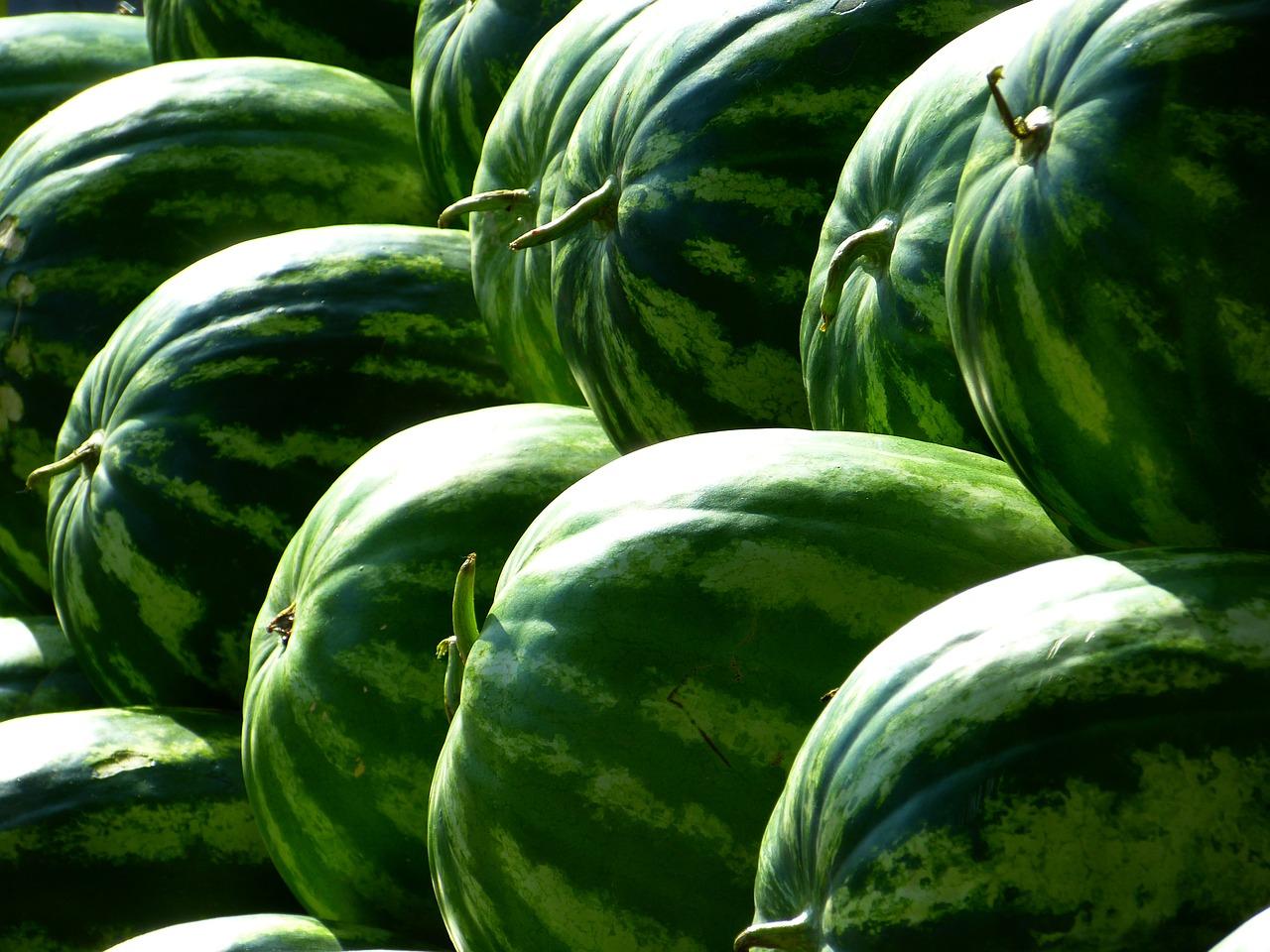 Saiba como escolher a melancia e seus benefícios para a saúde