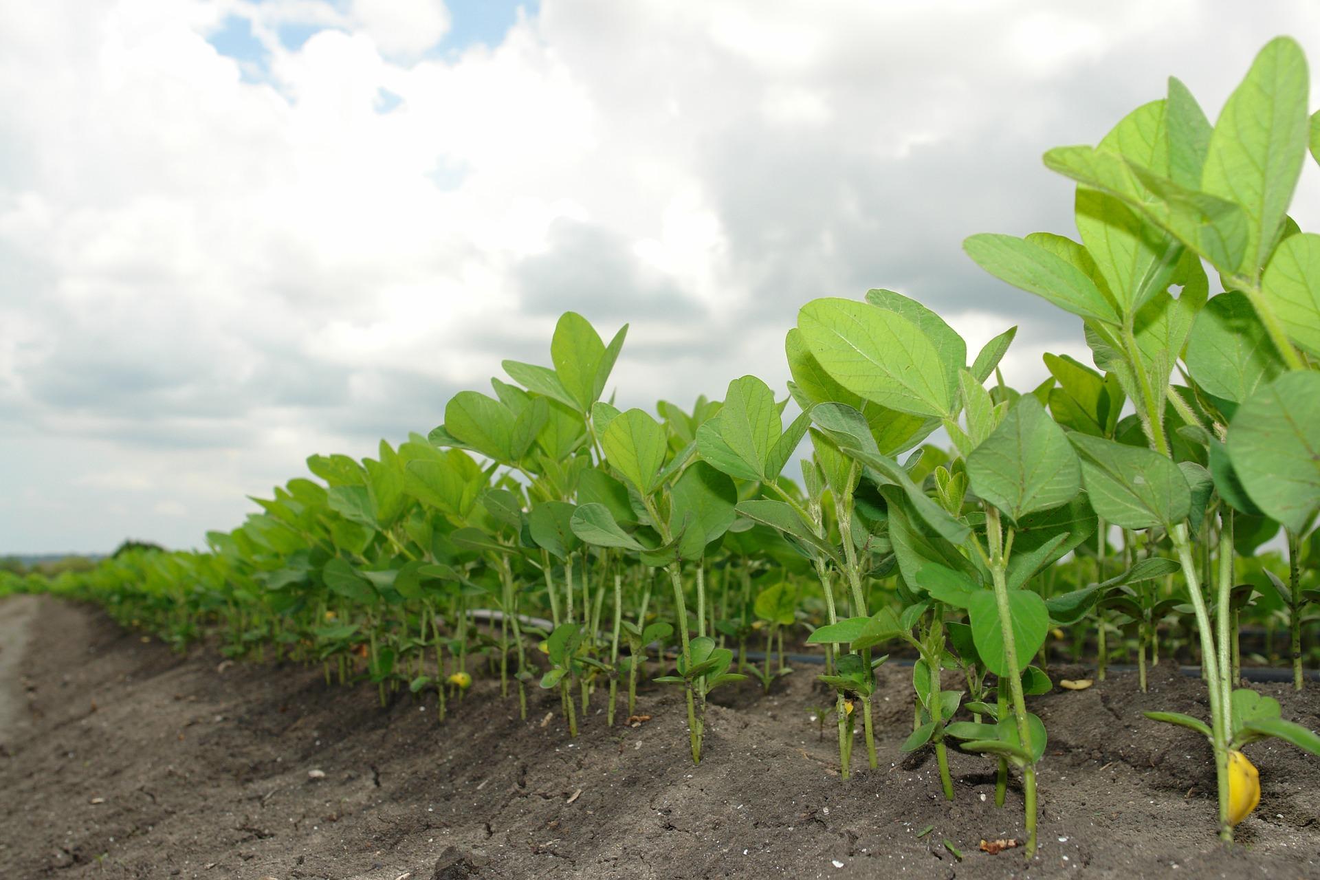 Alianza por el Suelo implementa un ambicioso plan para recuperar los suelos de Sudamérica