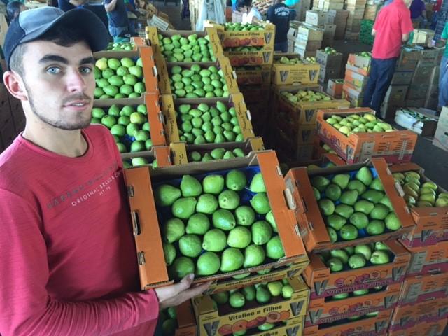 Safra da goiaba reduz preço da fruta em 20%