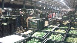 CeasaMinas intensificará a fiscalização de embalagens