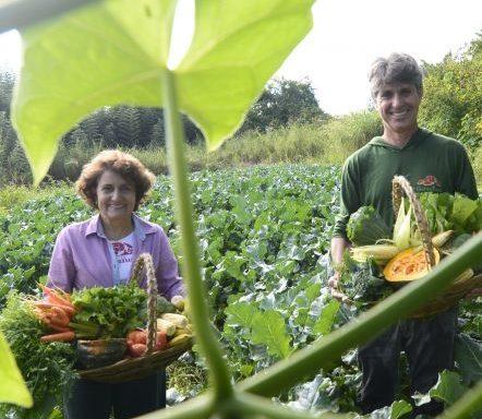 Consumo de orgânicos cresce 34% no DF e movimenta R$ 35 milhões