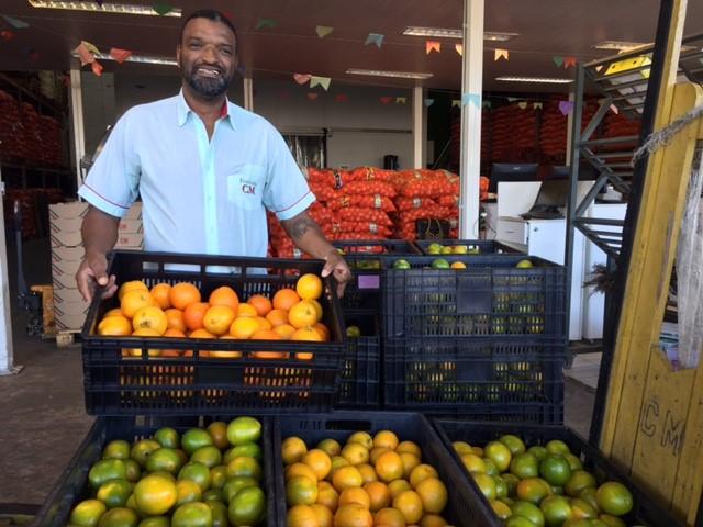 Em plena safra, preço da laranja cai 43,6%